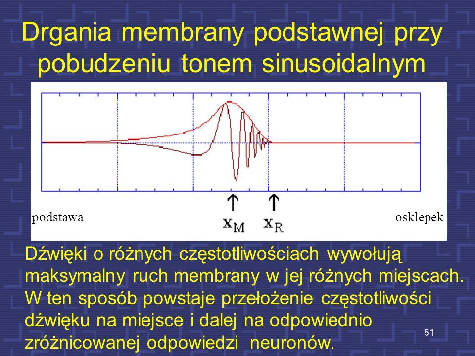 Rozkład drgań na membranie podstawnej – 4800 Hz 50