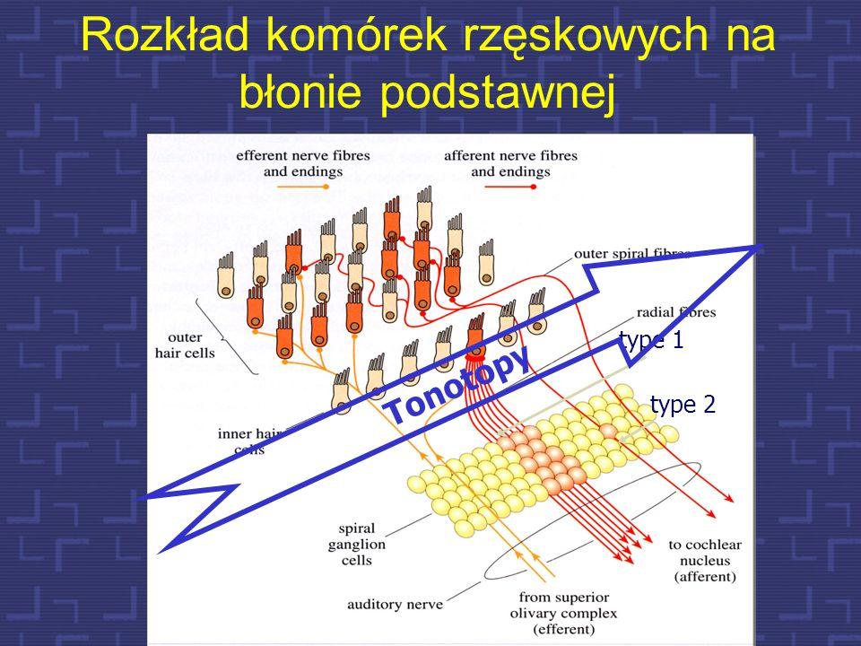 Przestrzenny rozkład drgań w błonie podstawnej 62 osklepek podstawa Okienko owalne Kierunek rozchodzenia się fali bieżącej