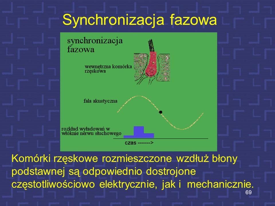 68 Rozkłady drgań na błony podstawnej w funkcji częstotliwości f= 1000 Hz f= 8000 Hz f= 1000 Hz i 8000 Hz Poziom =>głośny cichy