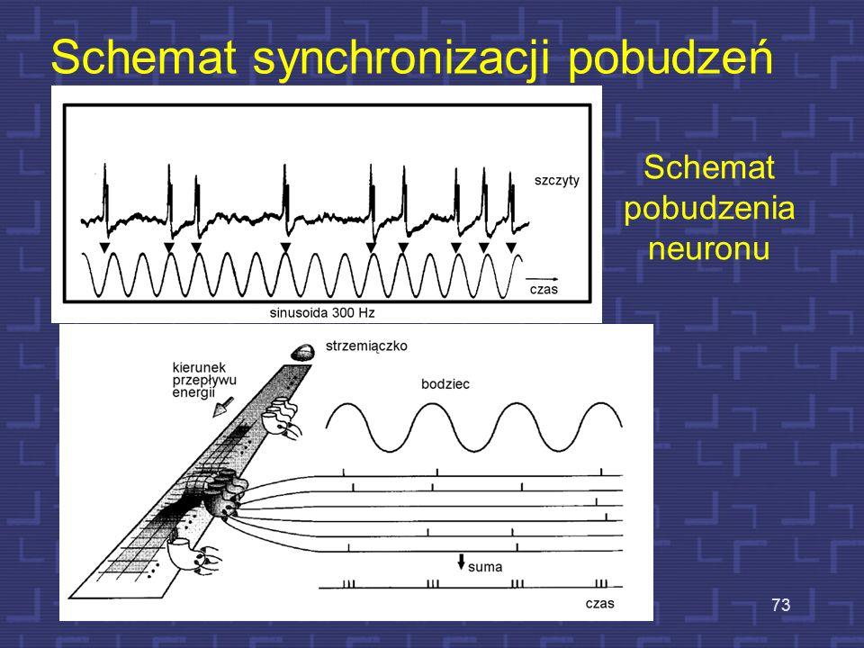 Synchronizacja fazy z pobudzeniem sinusoidalnym Dla częstotliwości < 5 kHz, impulsy nerwowe pojawiają się z określoną fazą zgodnie z cyklem sygnału po
