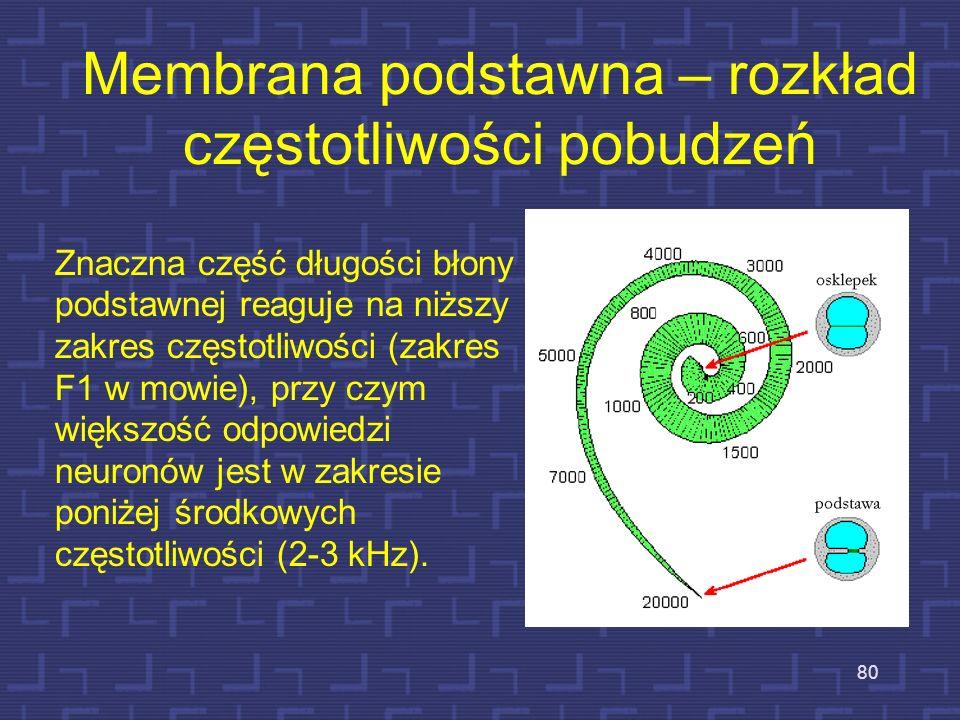 79 Membrana podstawna – rozkład częstotliwości Od osklepka (szczytu) w kierunku podstawy błony podstawnej rozkład miejsc pobudzeń zmienia się proporcj
