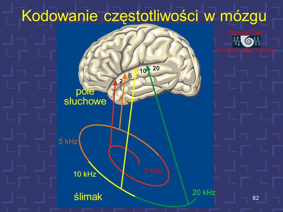Słuch, mowa w korze mózgowej 81 Ośrodek Wernickego – słuchowy ośrodek mowy Obszar Broca – okolica ruchowa mowy