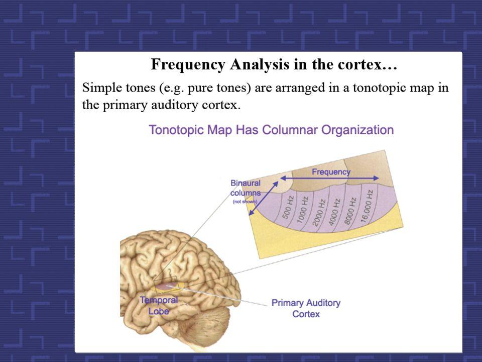 Kodowanie częstotliwości w mózgu 20 kHz 10 kHz 5 kHz 2 5 10 20 2 kHz Graeme Clark The Bionic Ear Institute pole słuchowe ślimak 82