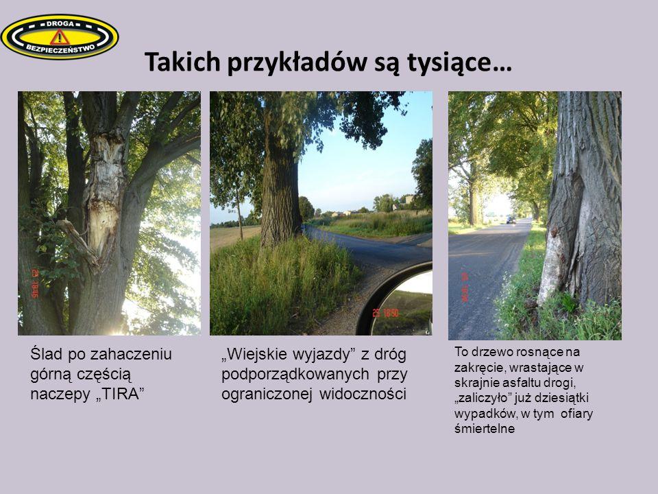 Takich przykładów są tysiące… To drzewo rosnące na zakręcie, wrastające w skrajnie asfaltu drogi, zaliczyło już dziesiątki wypadków, w tym ofiary śmie