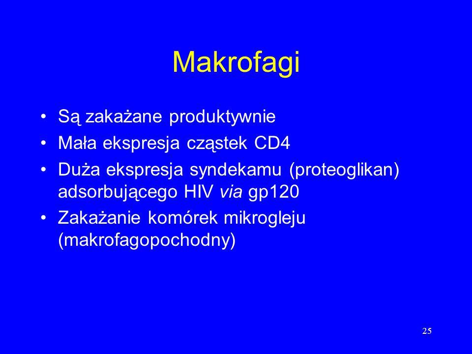 25 Makrofagi Są zakażane produktywnie Mała ekspresja cząstek CD4 Duża ekspresja syndekamu (proteoglikan) adsorbującego HIV via gp120 Zakażanie komórek