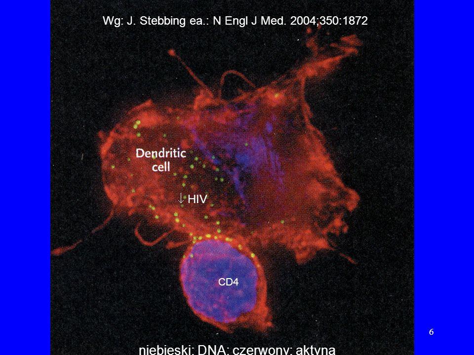 6 Wg: J. Stebbing ea.: N Engl J Med. 2004;350:1872 niebieski: DNA; czerwony: aktyna HIV CD4