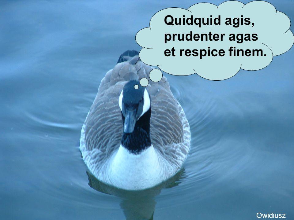 Quidquid agis, prudenter agas et respice finem. Owidiusz