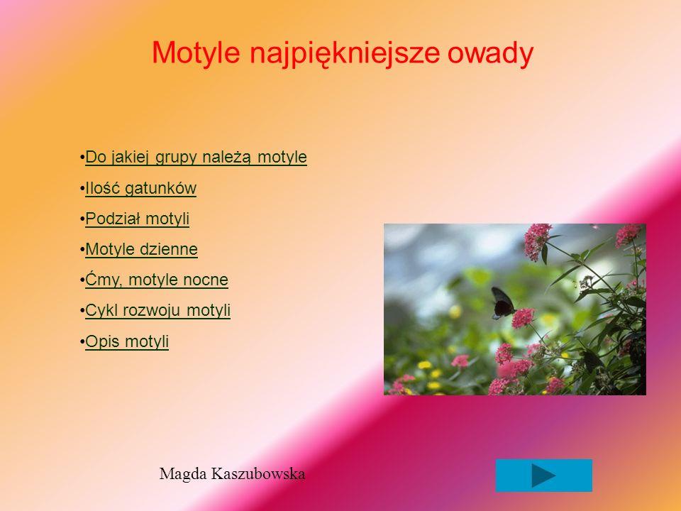 Motyle najpiękniejsze owady Do jakiej grupy należą motyle Ilość gatunków Podział motyli Motyle dzienne Ćmy, motyle nocne Cykl rozwoju motyli Opis motyli Magda Kaszubowska