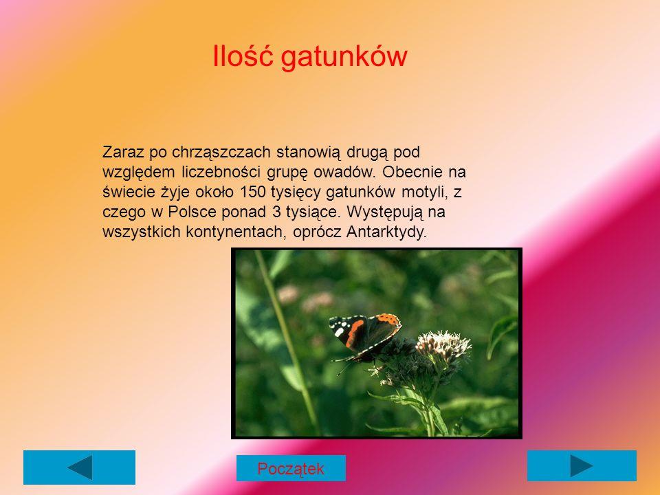 Ilość gatunków Zaraz po chrząszczach stanowią drugą pod względem liczebności grupę owadów.
