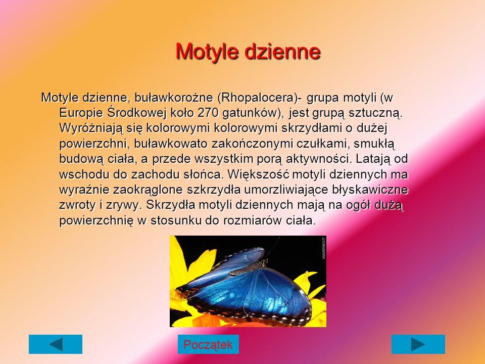Motyle dzienne Motyle dzienne Motyle dzienne, buławkorożne (Rhopalocera)- grupa motyli (w Europie Środkowej koło 270 gatunków), jest grupą sztuczną.