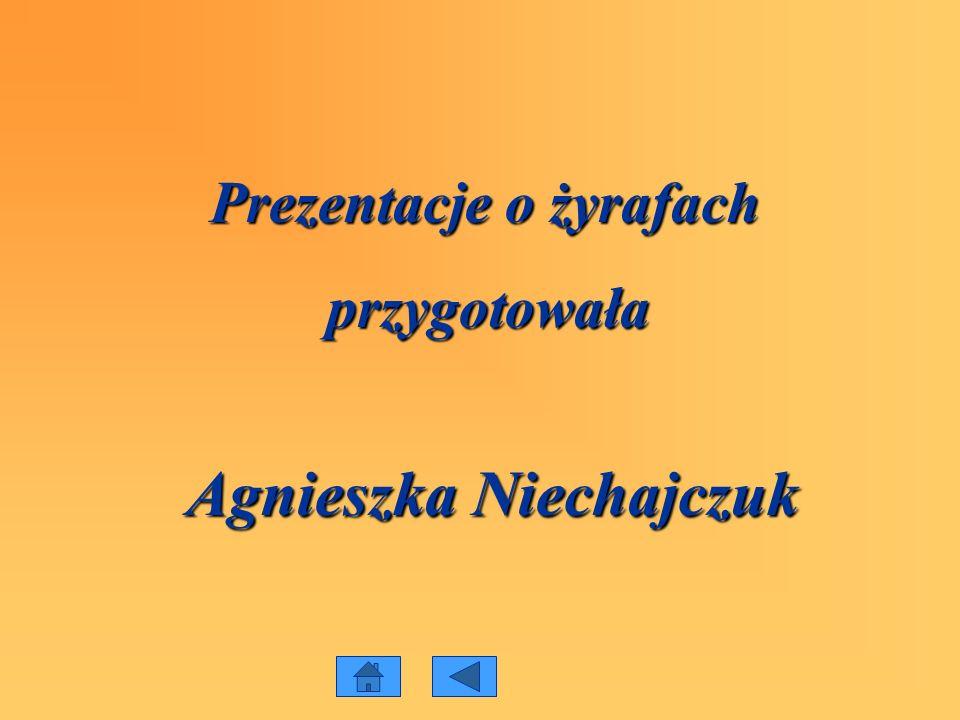 Prezentacje o żyrafach przygotowała przygotowała Agnieszka Niechajczuk