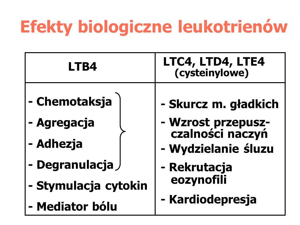 Efekty biologiczne leukotrienów LTB4 LTC4, LTD4, LTE4 (cysteinylowe) - Chemotaksja - Agregacja - Adhezja - Degranulacja - Stymulacja cytokin - Mediato