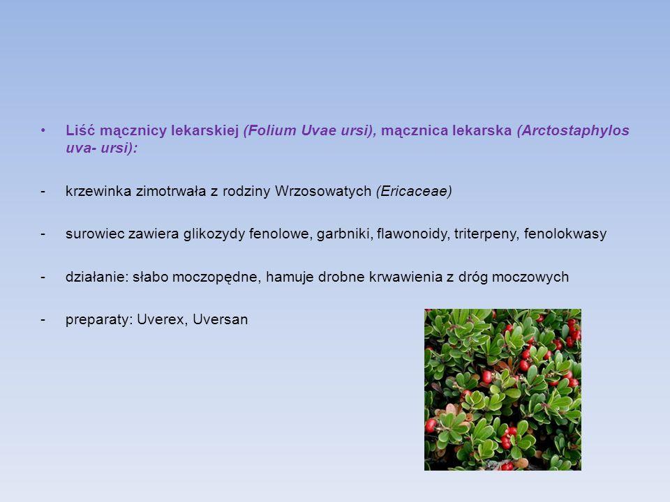Liść mącznicy lekarskiej (Folium Uvae ursi), mącznica lekarska (Arctostaphylos uva- ursi): -krzewinka zimotrwała z rodziny Wrzosowatych (Ericaceae) -s