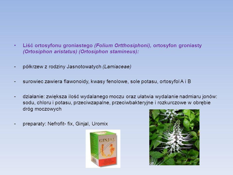 Liść ortosyfonu groniastego (Folium Ortthosiphoni), ortosyfon groniasty (Ortosiphon aristatus) (Ortosiphon stamineus): -półkrzew z rodziny Jasnotowaty