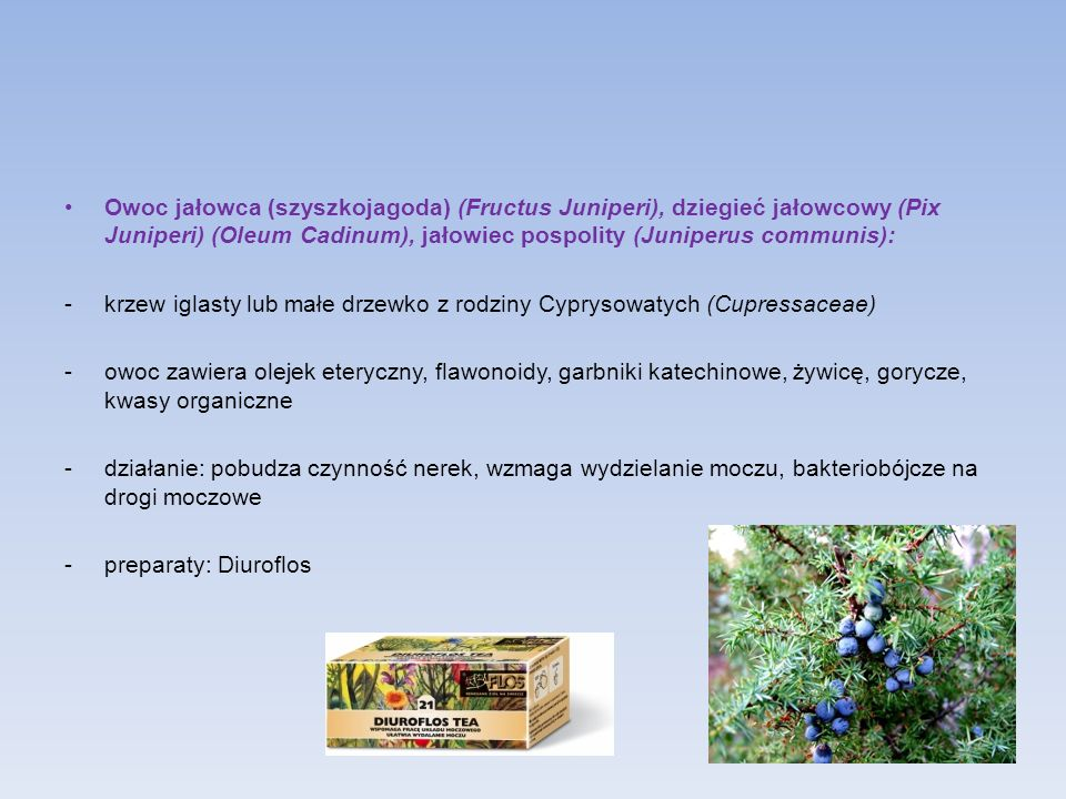 Owoc jałowca (szyszkojagoda) (Fructus Juniperi), dziegieć jałowcowy (Pix Juniperi) (Oleum Cadinum), jałowiec pospolity (Juniperus communis): -krzew ig