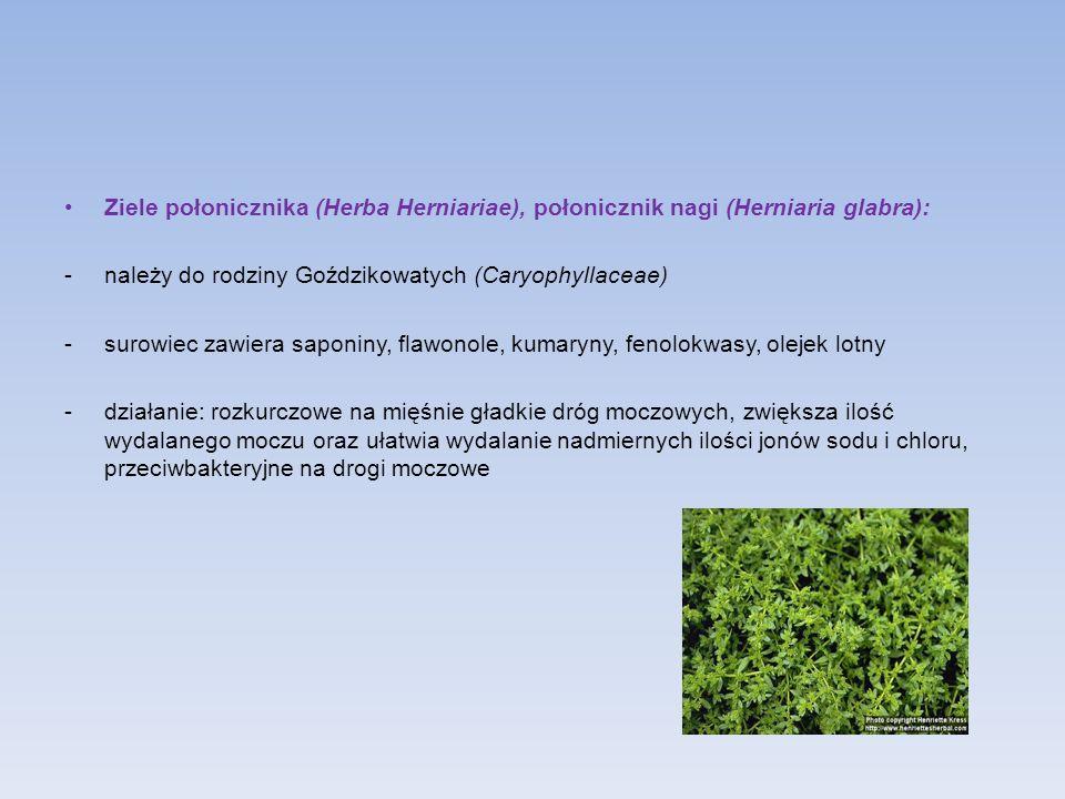 Ziele połonicznika (Herba Herniariae), połonicznik nagi (Herniaria glabra): -należy do rodziny Goździkowatych (Caryophyllaceae) -surowiec zawiera sapo