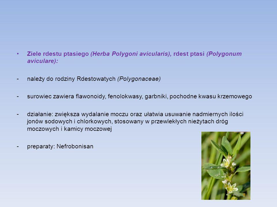 Ziele rdestu ptasiego (Herba Polygoni avicularis), rdest ptasi (Polygonum aviculare): -należy do rodziny Rdestowatych (Polygonaceae) -surowiec zawiera