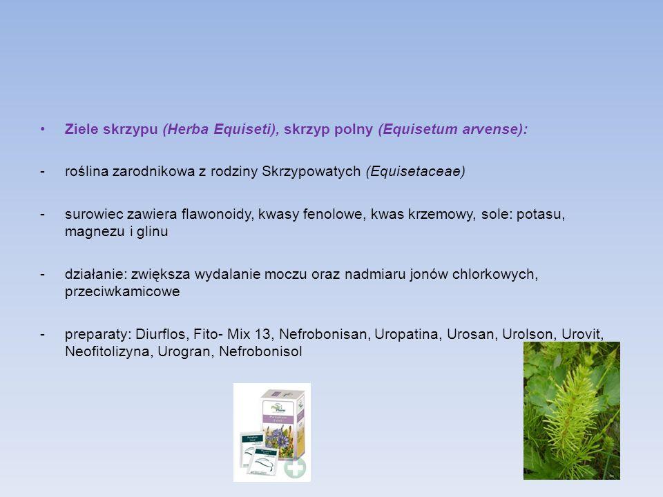 Ziele skrzypu (Herba Equiseti), skrzyp polny (Equisetum arvense): -roślina zarodnikowa z rodziny Skrzypowatych (Equisetaceae) -surowiec zawiera flawon