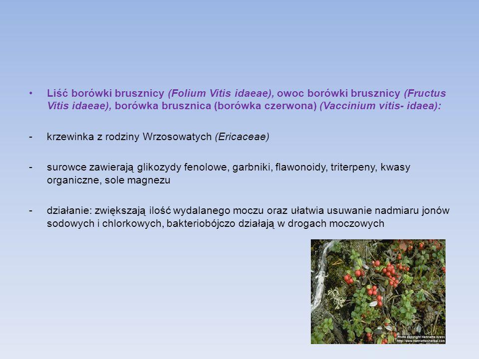 Liść borówki brusznicy (Folium Vitis idaeae), owoc borówki brusznicy (Fructus Vitis idaeae), borówka brusznica (borówka czerwona) (Vaccinium vitis- id