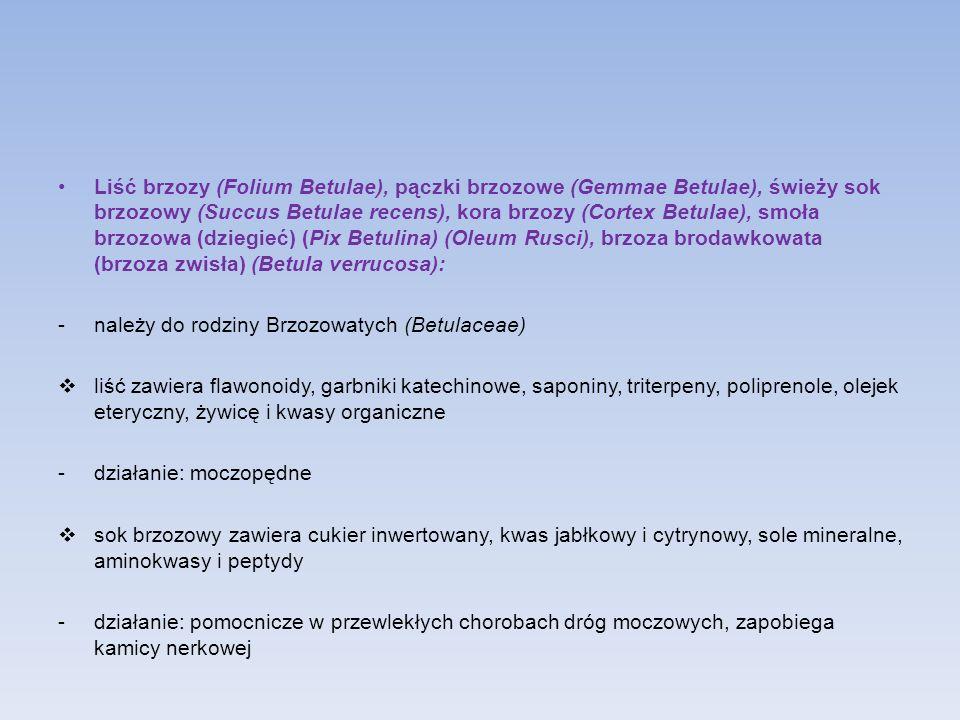 Liść brzozy (Folium Betulae), pączki brzozowe (Gemmae Betulae), świeży sok brzozowy (Succus Betulae recens), kora brzozy (Cortex Betulae), smoła brzoz