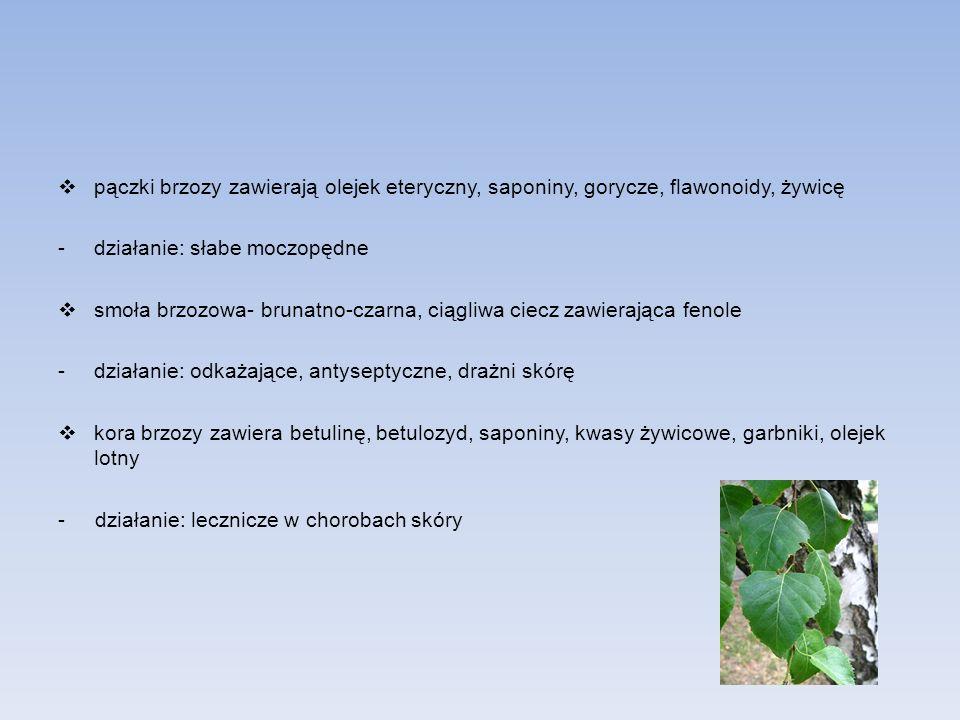 pączki brzozy zawierają olejek eteryczny, saponiny, gorycze, flawonoidy, żywicę -działanie: słabe moczopędne smoła brzozowa- brunatno-czarna, ciągliwa