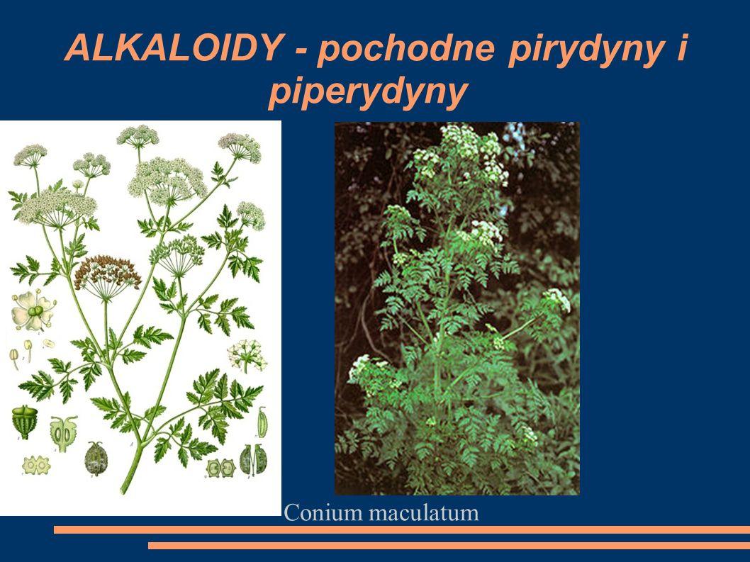 Conium maculatum ALKALOIDY - pochodne pirydyny i piperydyny