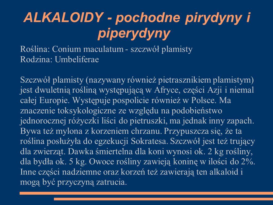 Roślina: Conium maculatum - szczwół plamisty Rodzina: Umbeliferae Szczwół plamisty (nazywany również pietrasznikiem plamistym) jest dwuletnią rośliną