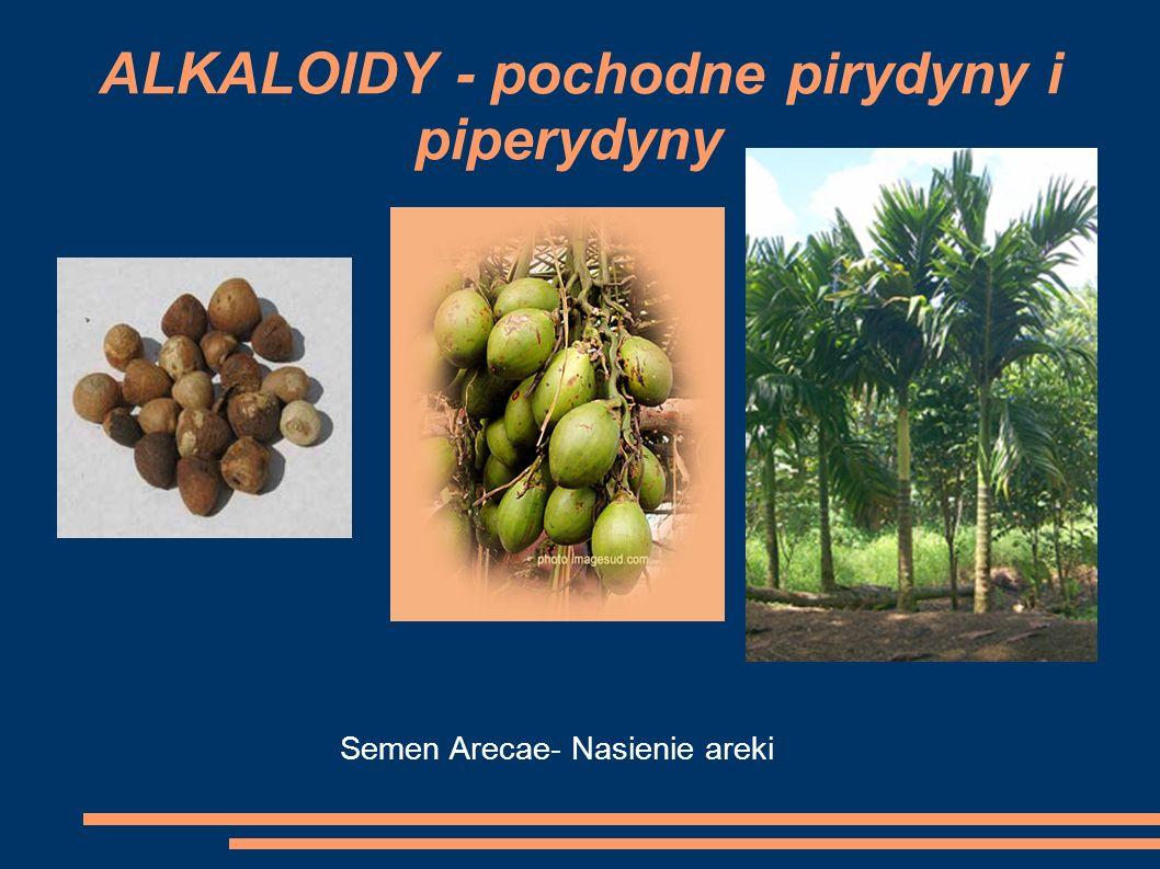 Semen Arecae- Nasienie areki ALKALOIDY - pochodne pirydyny i piperydyny