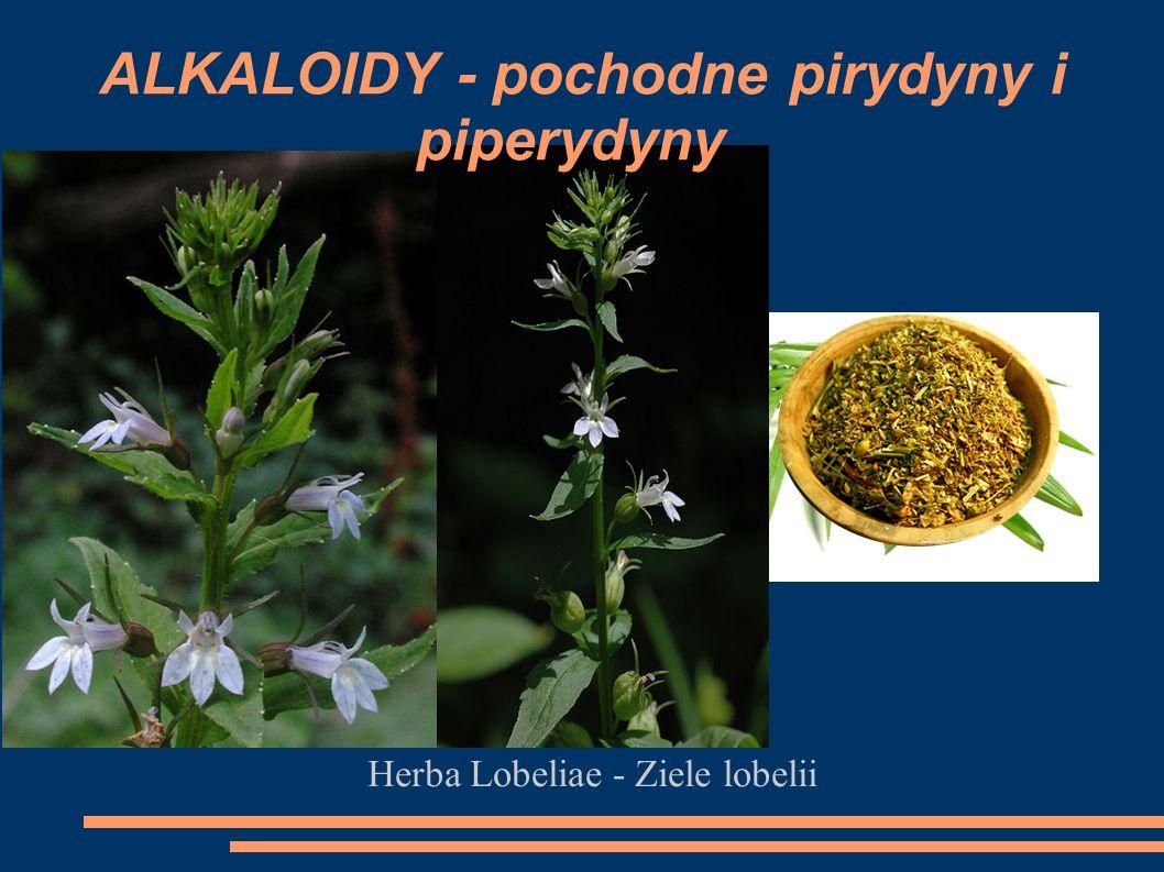 Herba Lobeliae - Ziele lobelii ALKALOIDY - pochodne pirydyny i piperydyny