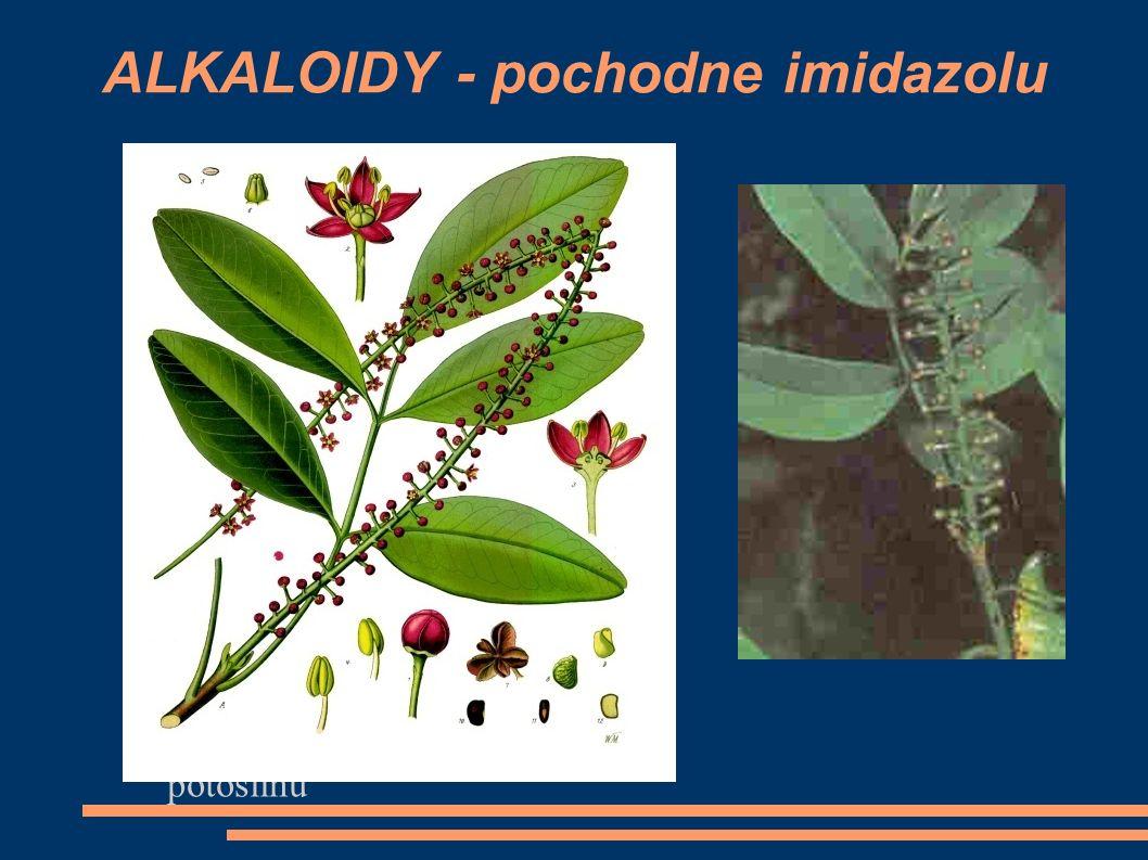 ALKALOIDY - pochodne imidazolu Folium Jaboranti - liść potoślinu