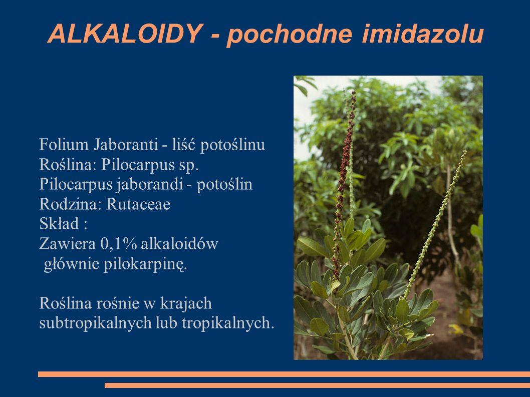 ALKALOIDY - pochodne imidazolu Folium Jaboranti - liść potoślinu Roślina: Pilocarpus sp. Pilocarpus jaborandi - potoślin Rodzina: Rutaceae Skład : Zaw