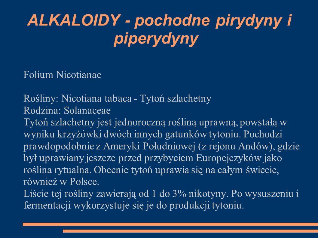 Folium Nicotianae Rośliny: Nicotiana tabaca - Tytoń szlachetny Rodzina: Solanaceae Tytoń szlachetny jest jednoroczną rośliną uprawną, powstałą w wynik