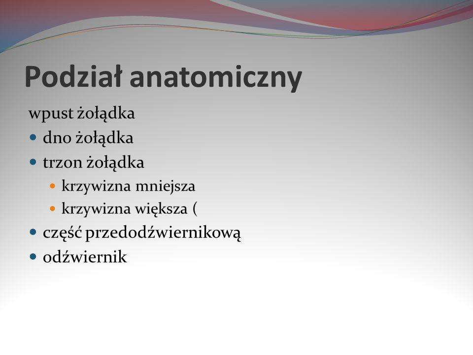 Podział anatomiczny wpust żołądka dno żołądka trzon żołądka krzywizna mniejsza krzywizna większa ( część przedodźwiernikową odźwiernik