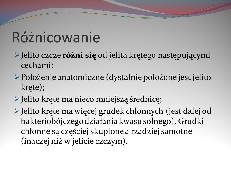 Różnicowanie Jelito czcze różni się od jelita krętego następującymi cechami: Położenie anatomiczne (dystalnie położone jest jelito kręte); Jelito kręt