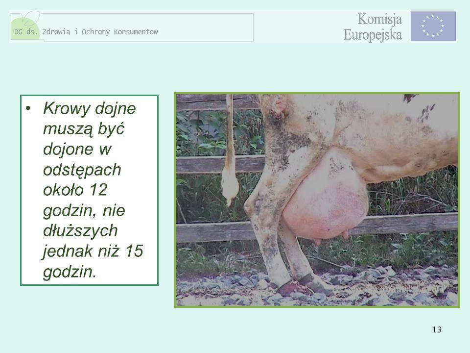 13 Krowy dojne muszą być dojone w odstępach około 12 godzin, nie dłuższych jednak niż 15 godzin.