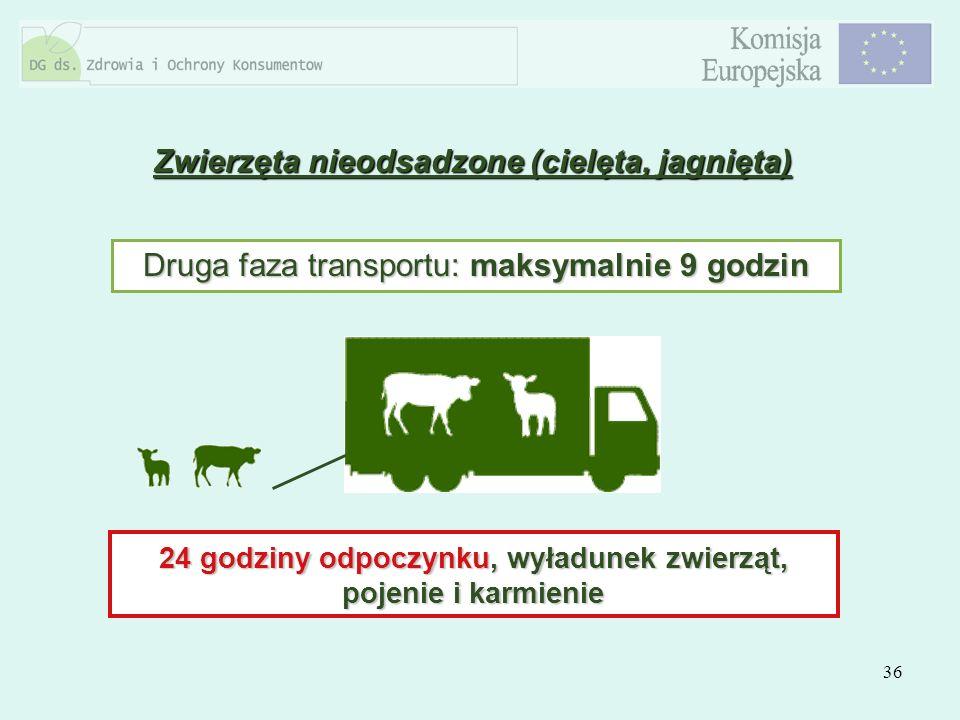 36 Zwierzęta nieodsadzone (cielęta, jagnięta) Druga faza transportu: maksymalnie 9 godzin 24 godziny odpoczynku, wyładunek zwierząt, pojenie i karmien
