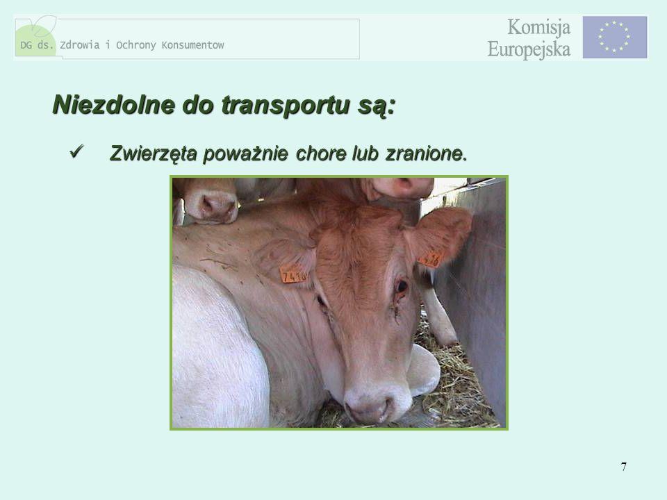 7 Zwierzęta poważnie chore lub zranione. Zwierzęta poważnie chore lub zranione. Niezdolne do transportu są: