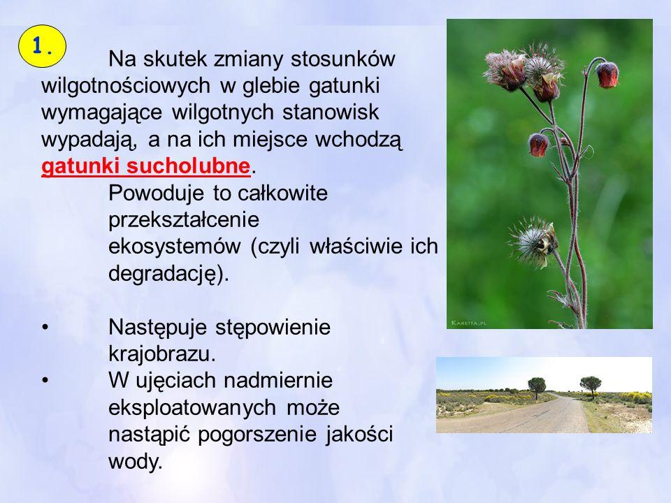 Na skutek zmiany stosunków wilgotnościowych w glebie gatunki wymagające wilgotnych stanowisk wypadają, a na ich miejsce wchodzą gatunki sucholubne. Po