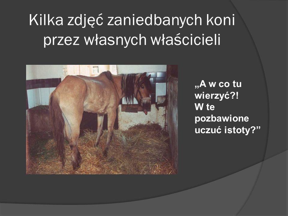 Kilka zdjęć zaniedbanych koni przez własnych właścicieli A w co tu wierzyć?! W te pozbawione uczuć istoty?