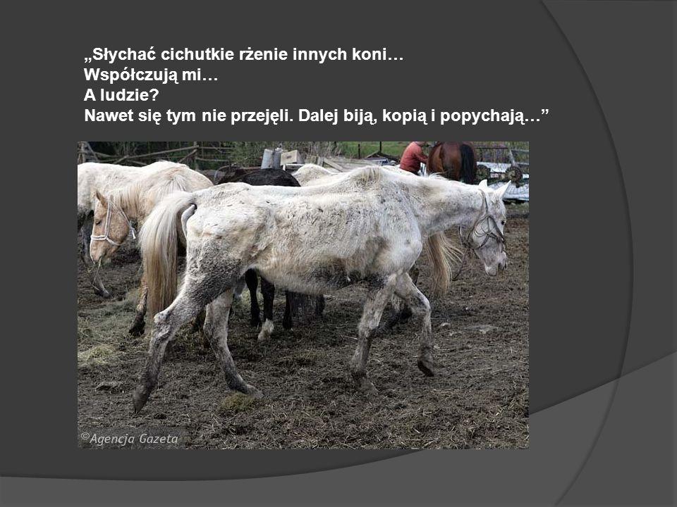Słychać cichutkie rżenie innych koni… Współczują mi… A ludzie? Nawet się tym nie przejęli. Dalej biją, kopią i popychają…