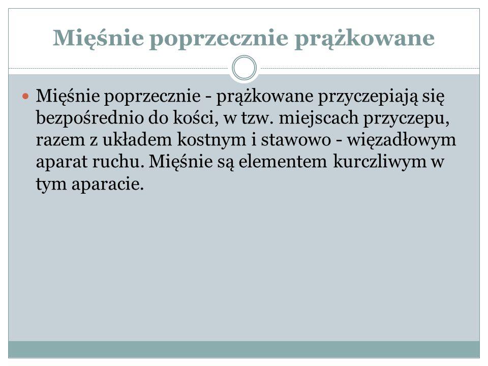 Mięśnie klatki piersiowej - podobojczykowy pp.częś chrzęstno kostna pierwszego żebra pk.
