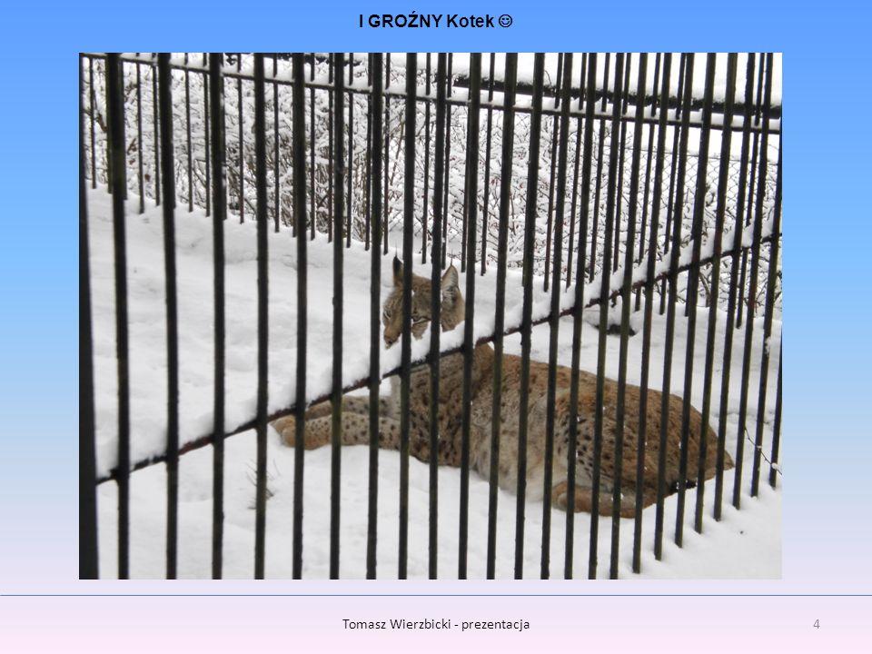 5Tomasz Wierzbicki - prezentacja Ciekawe czy w stopy im nie zimno ???