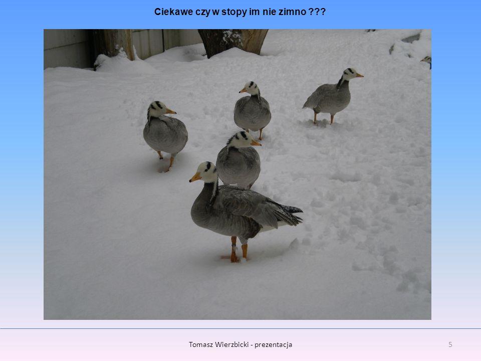 6Tomasz Wierzbicki - prezentacja