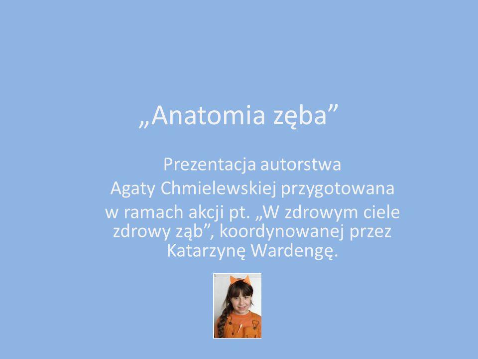 Anatomia zęba Prezentacja autorstwa Agaty Chmielewskiej przygotowana w ramach akcji pt. W zdrowym ciele zdrowy ząb, koordynowanej przez Katarzynę Ward