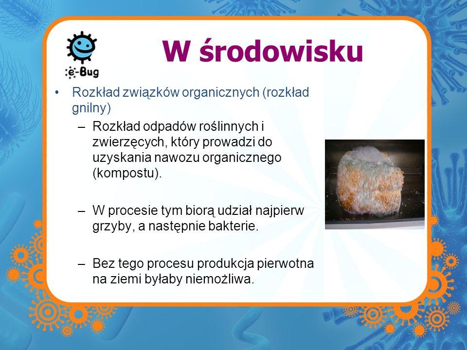 W przemyśle spożywczym Ser i jogurt –Jogurty i ser powstają w procesie fermentacji kwasu mlekowego.