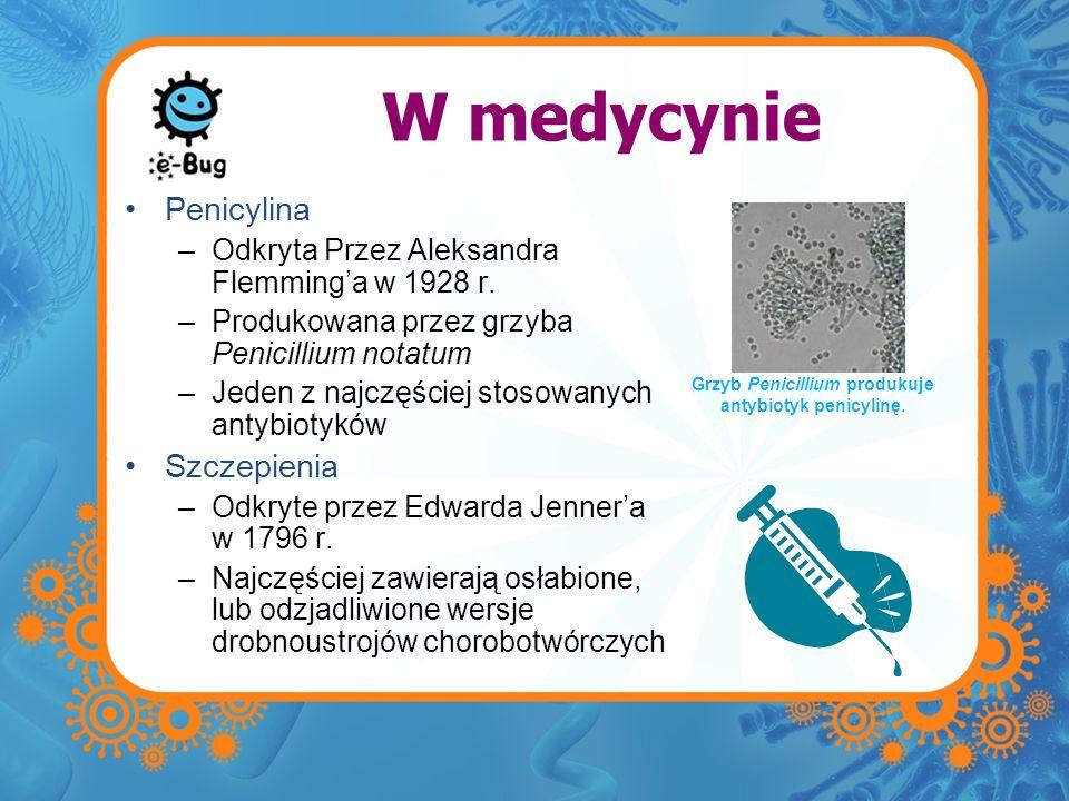 W medycynie Penicylina –Odkryta Przez Aleksandra Flemminga w 1928 r. –Produkowana przez grzyba Penicillium notatum –Jeden z najczęściej stosowanych an