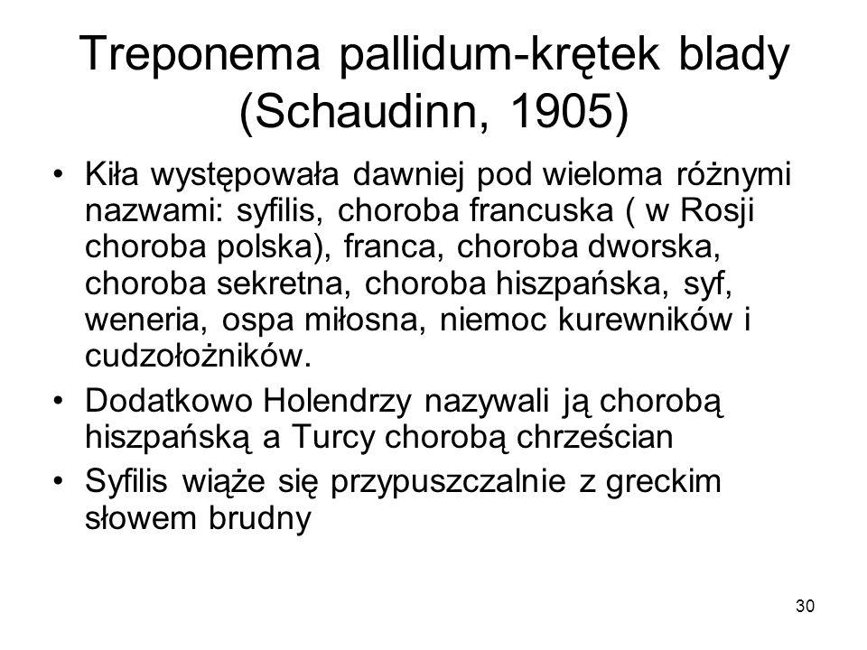 30 Treponema pallidum-krętek blady (Schaudinn, 1905) Kiła występowała dawniej pod wieloma różnymi nazwami: syfilis, choroba francuska ( w Rosji chorob