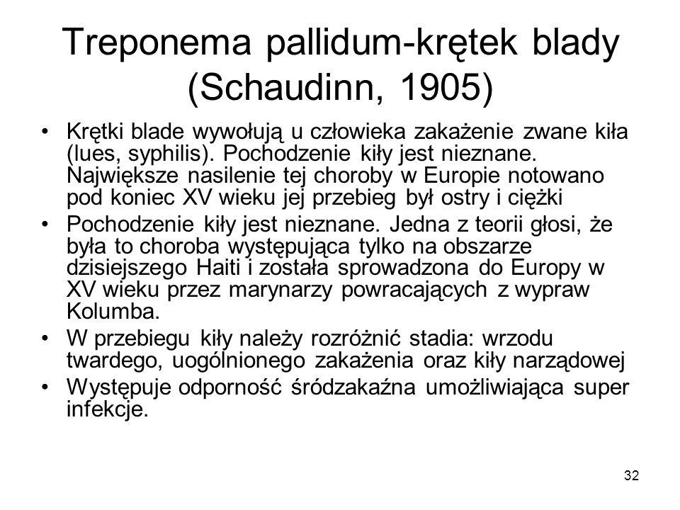 32 Treponema pallidum-krętek blady (Schaudinn, 1905) Krętki blade wywołują u człowieka zakażenie zwane kiła (lues, syphilis). Pochodzenie kiły jest ni
