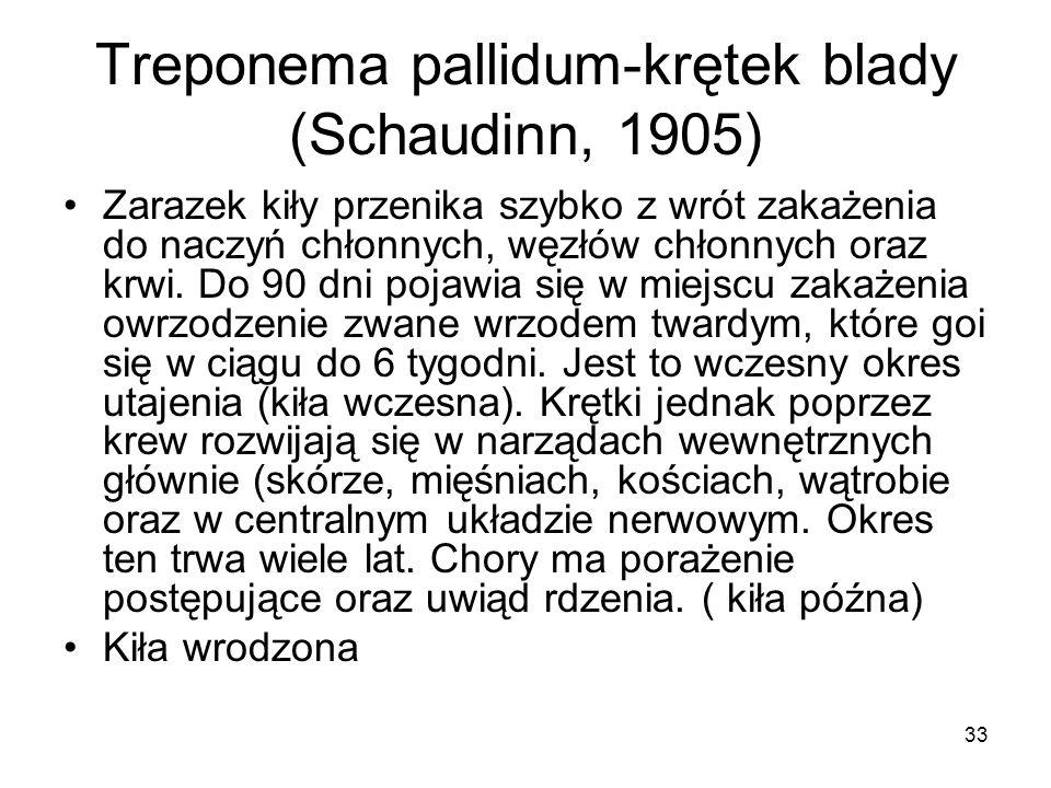 33 Treponema pallidum-krętek blady (Schaudinn, 1905) Zarazek kiły przenika szybko z wrót zakażenia do naczyń chłonnych, węzłów chłonnych oraz krwi. Do