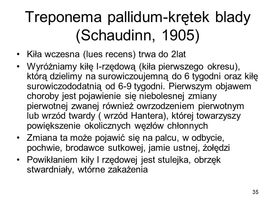 35 Treponema pallidum-krętek blady (Schaudinn, 1905) Kiła wczesna (lues recens) trwa do 2lat Wyróżniamy kiłę I-rzędową (kiła pierwszego okresu), którą